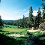 Golf Abounds in Truckee (Coyote Moon)