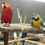 World Parrot Refuge
