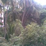 Trees outside hotel