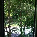 Blick aus dem Fenster in den Wald