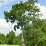 The Atchafalaya Experience Foto