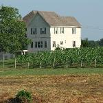 Picture of the B&B and vineyard