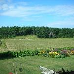 Cranberry Bog View From Porch
