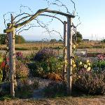 Early Evening Garden