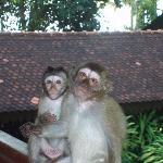 les singes!!