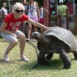 couriouse tartarughe giganti
