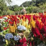 Beutiful Gardens