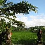 view of rice fields from pool