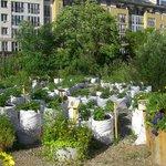 Pflanzenvielfalt im Prinzessinnengarten