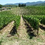 une vue de la vigne Toscane