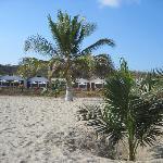 Vista de bungalows y palmeras con cocos