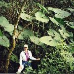 Trish in the Cloud Forest