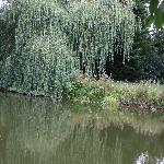 Fishing by the Willow !