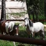 owners horses on property