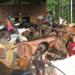 All the horses lined up waiting for their riders