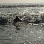Bretter kann man am Strand leihen