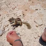 les écureuils pas farouches