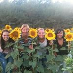 Second Stop - Sunflower Fields