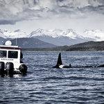 Photo Safari by Land & Sea
