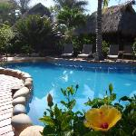 The beautiful pool surrounded by lush vegetation
