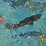 poissons potographiés de la terrasse