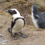 The little penguins were so adorable!
