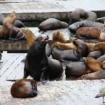 Sealions at Pier 39