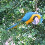 Photo of Pousada Sitio Dos Tucanos