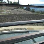 view of vinyards