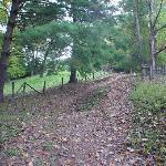 Lane on the farm