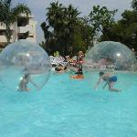 hamster ball Thursday