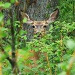 Charlie Lake Provincial Park