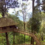 Nature Zone Tree House