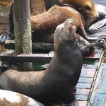 Sea Lions in Newport
