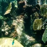 Snorkeling around the rock with the Mayan ruin