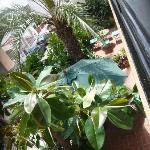 terrasse vue de notre balcon
