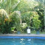 Tropical garden next to the pool