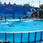 Excellent Dolphin Show
