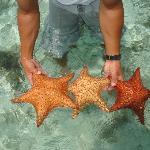 ....tra le stelle marine....