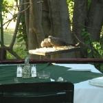 Photo of Sedia Riverside Hotel