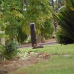 Umcoelho selvagem no jardim em frente ao quarto
