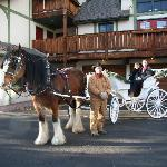 Enjoy the scenery on a cozy carriage ride.
