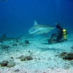 Ocean Explorers Shark Dive