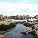 The tidal pools nearby where my favorite part of the trip
