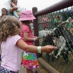 my kids feeding the animals