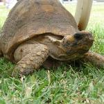 la petite tortue du patio
