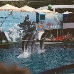 show dolphinarium à l'américaine - gratuit