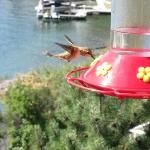 Hummingbirds on the breakfast deck