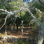The cork forest on the way to Grazelema