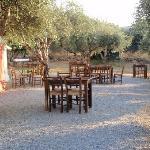 Diner under the olive trees